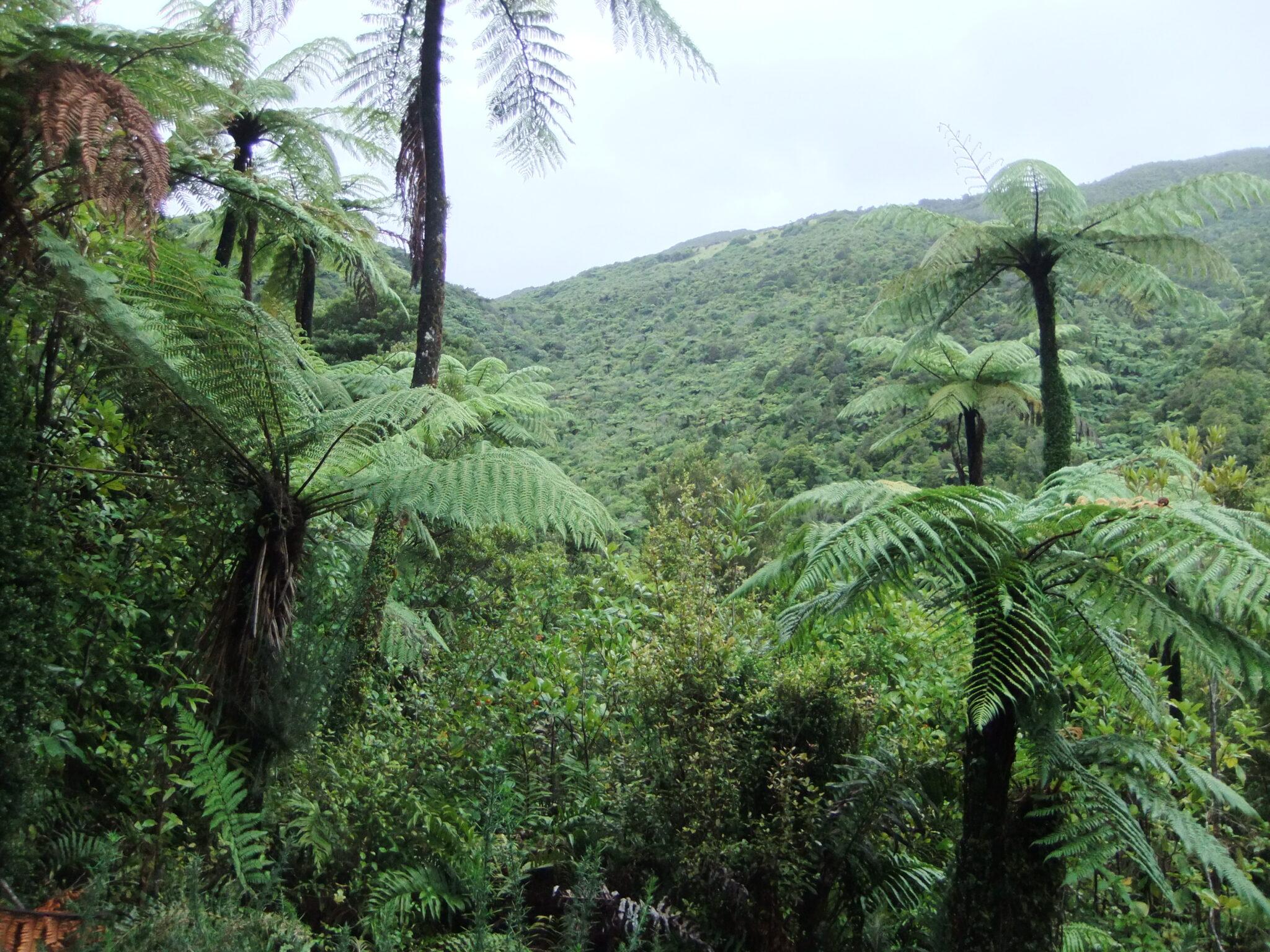"""Ich bin auf dem Te Araroa Trail als """"Low Carbon Traveller"""" unterwegs"""
