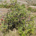 Tag 28 (9.2.): Ein Apfelbaum in der Sonne